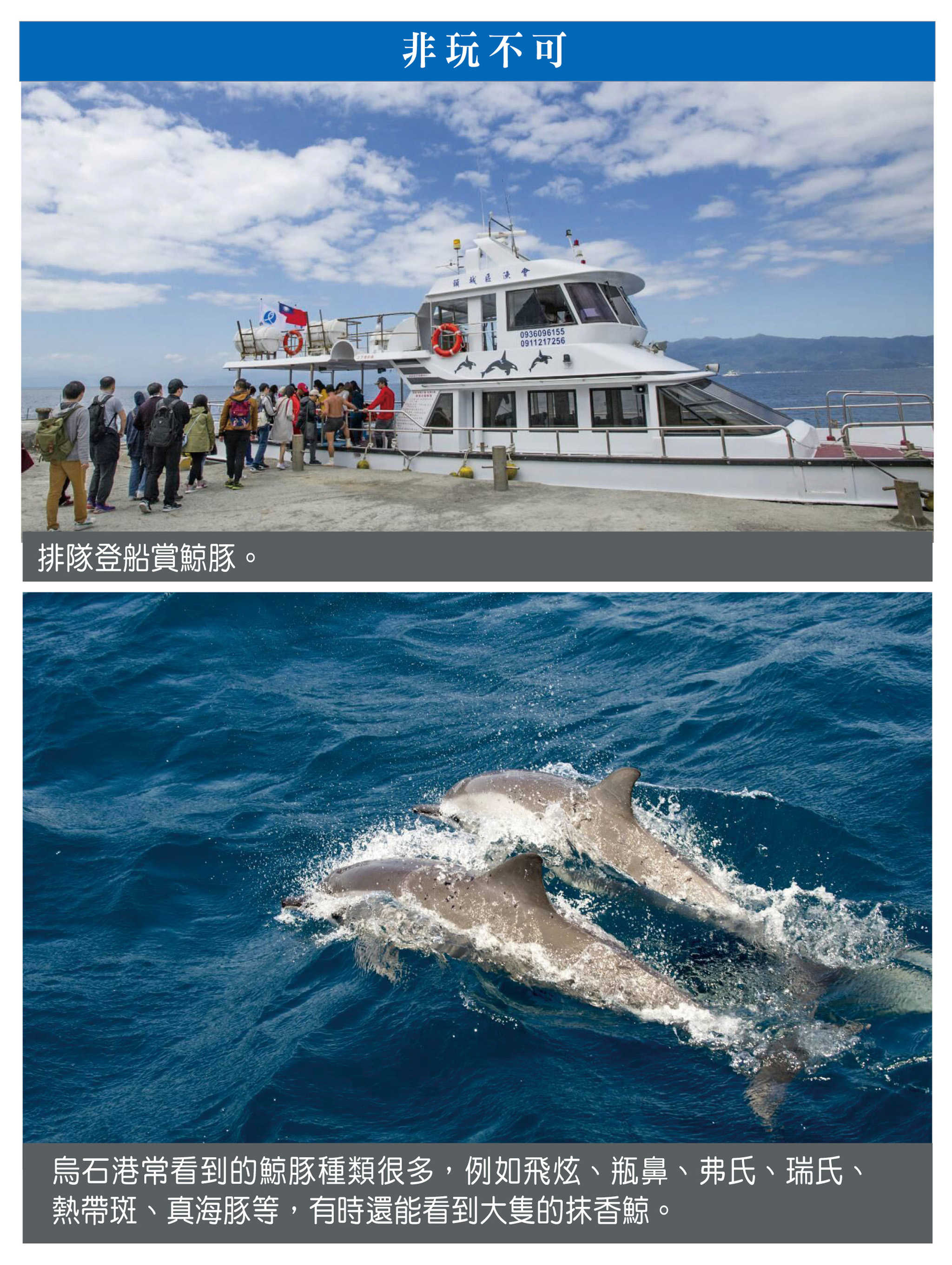 非玩不可:排隊登船賞鯨豚(上圖)、烏石港常看到的鯨豚種類很多,例如飛炫、瓶鼻、弗氏、瑞氏、熱帶斑、真海豚等,有時還能看到大隻的抹香鯨(下圖)。