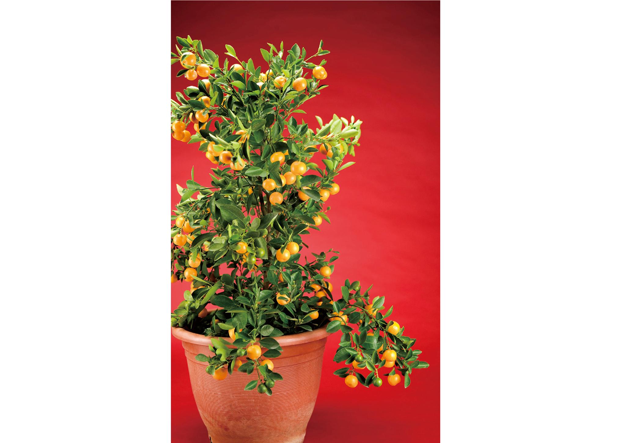 可透過盆栽擺視改善居家風水。